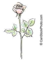 vektor, háttér, rózsa, rózsaszínű, elszigetelt, egyedülálló, white virág, ábra