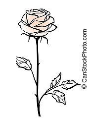 vektor, háttér, rózsa, rózsaszínű, gyönyörű, elszigetelt, egyedülálló, white virág, ábra