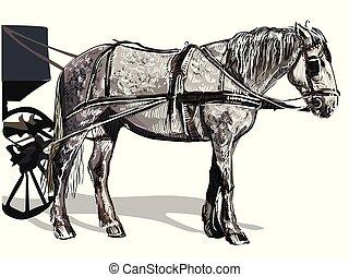 vektor, kéz, rajz, hám, ló, színes