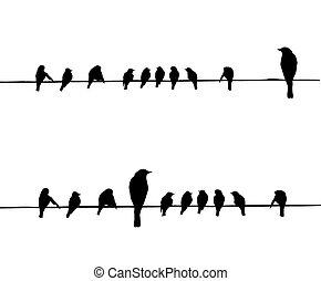 vektor, körvonal, drót, madarak