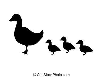 vektor, kiskacsák, fekete, csecsemő, kacsa, árnykép