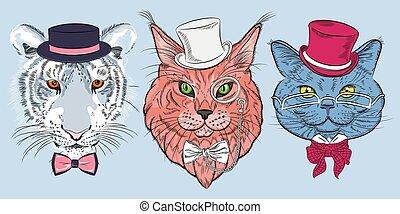 vektor, macska, állhatatos, csípőre szabott