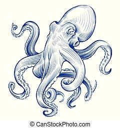 vektor, polip, octopus., maratás, szüret, kéz, húzott, tintahal, bevésett, animal., ábra, óceán