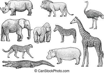 vektor, rajz, metszés, állatok, megtölt rajzóra, ábra, tinta, afrikai