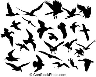 vektor, repülés, madarak