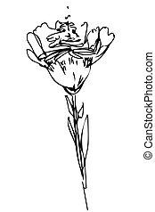 vektor, skicc, virágbimbó, szár