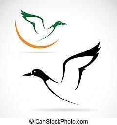 vektor, vad, kép, repülés, kacsa