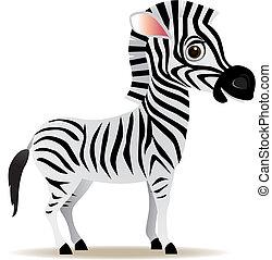 vektor, zebra, karikatúra