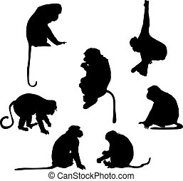 vidám, körvonal, majom