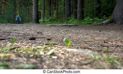 video, defocused, emberek, erdő, gyalogló
