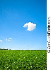 világos blue, friss, ég, fű, zöld