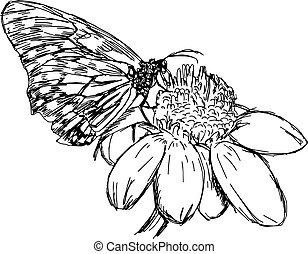 virág, ábra, kéz, vektor, százszorszép, húzott, doodles, butterfly.
