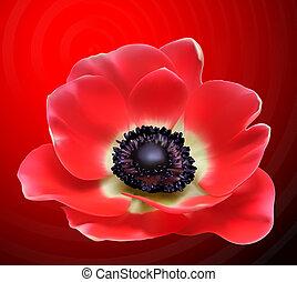 virág, ábra, vektor, mák, piros, design.