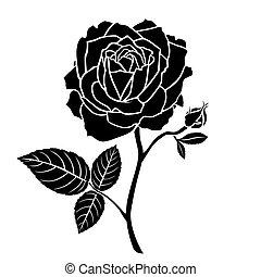virág, árnykép, rózsa szem