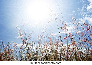 virág, ég, fű, vad