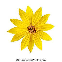 virág, elszigetelt, sárga