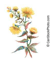 virág, elszigetelt, sárga, kéz, háttér., húzott, fehér