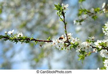 virág, fa, alma, méh