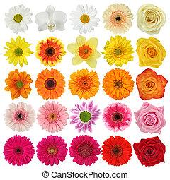 virág, gyűjtés