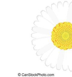 virág, háttér, százszorszép
