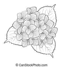virág, hortenzia, elszigetelt, fekete, fehér, monochrom