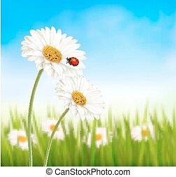 virág, illustration., természet, eredet, vektor, ladybug., százszorszép