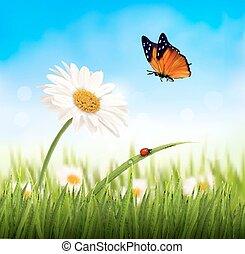 virág, illustration., természet, eredet, vektor, százszorszép, butterfly.