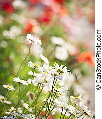 virág, kaszáló