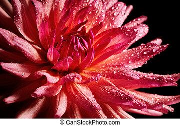 virág, piros