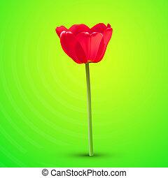 virág, piros, vektor, tulipán