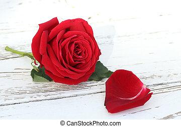 virág, rózsa, erdő, háttér, white piros