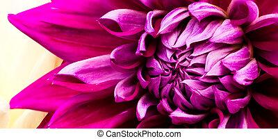virág, rózsaszínű