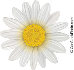 virág százszorszép