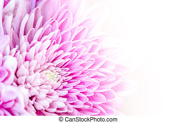 virág, színes, makro, részletez, háttér, virágzó, fehér