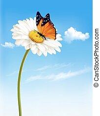 virág, természet, eredet, ábra, vektor, százszorszép, butterfly.