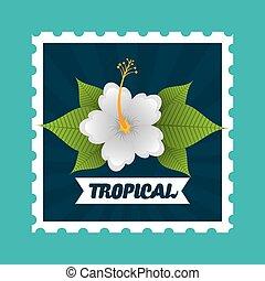 virág, tropikus