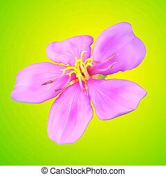 virág, vektor, behálóz, ábra