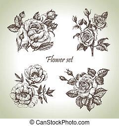 virágos, set., kéz, agancsrózsák, ábra, húzott