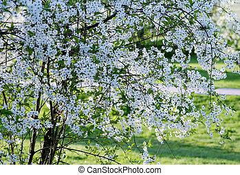 virágzás, fa