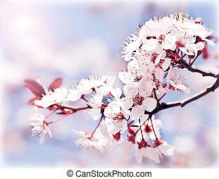 virágzó, eredet, fa
