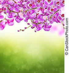 virágzó, menstruáció, elágazik, orhidea