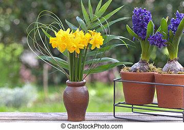 virágzó, nárciszok, jácint, befőzött, csokor, kert