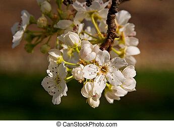 virágzó