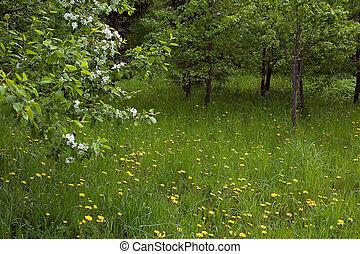 virágzó, természet