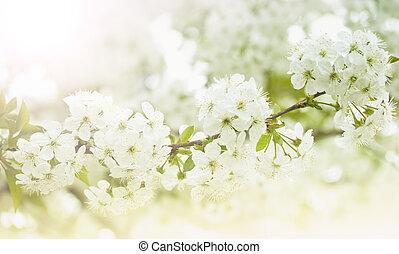virágzó, visszaugrik virág, elágazik, cseresznye