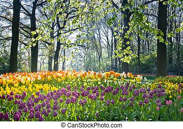 visszaugrik virág, fény, április