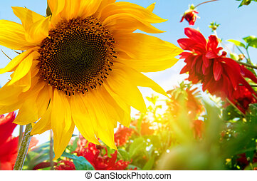 visszaugrik virág, kert