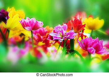 visszaugrik virág, kert, színes