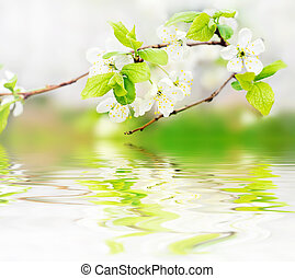 visszaugrik virág, lenget, elágazik, víz