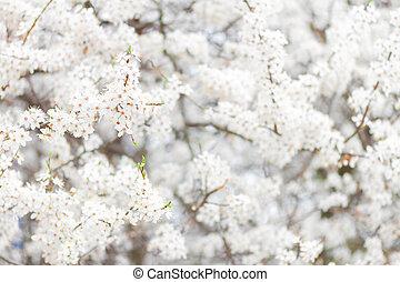 visszaugrik virág, virágzó